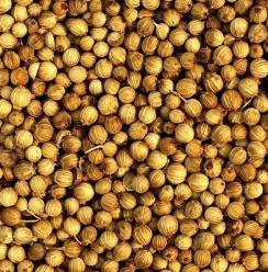 Coriander Seeds (Australia) 1kg Image